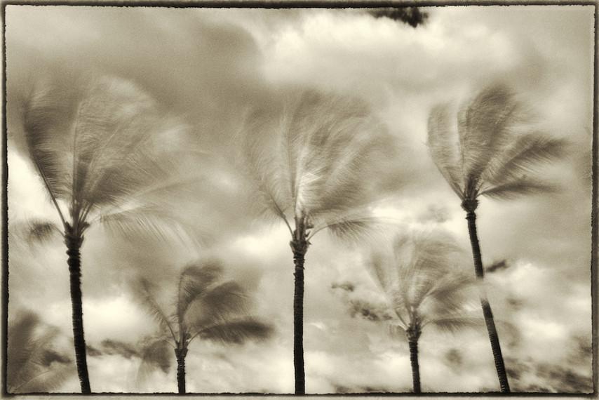 Palm Study 05
