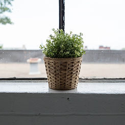 Plastic Plant on Windowsill