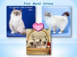 First Marali Kittens Rev.jpg