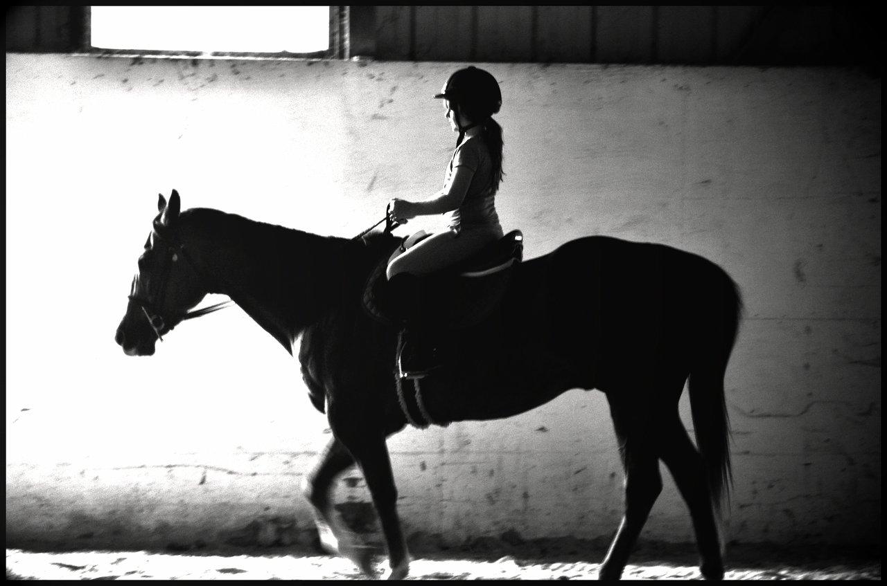 Oswego Horse photographer