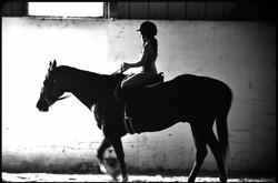 BRANDI+HORSE+57BWBW