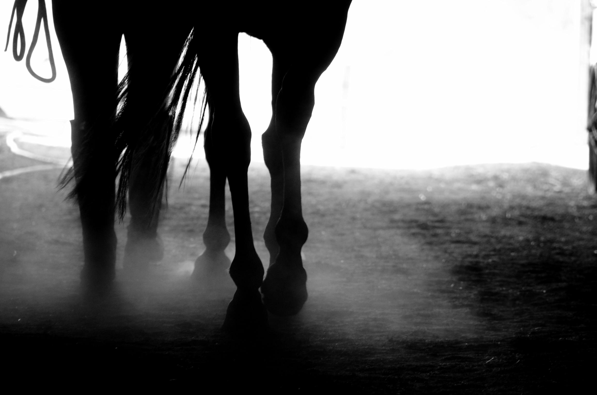HORSE+1BW