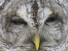 Review of the Science Directly Related to the Effects of Barred Owls on Spotted Owls