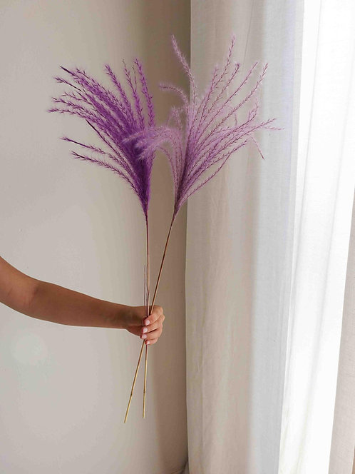 Lila Violett Miscanthus Trockenblume