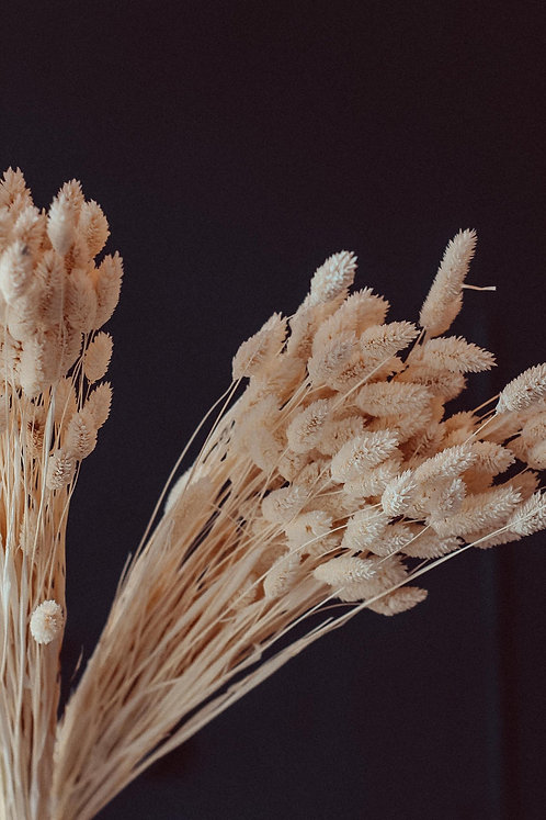 Phalaris getrocknet | natur beige