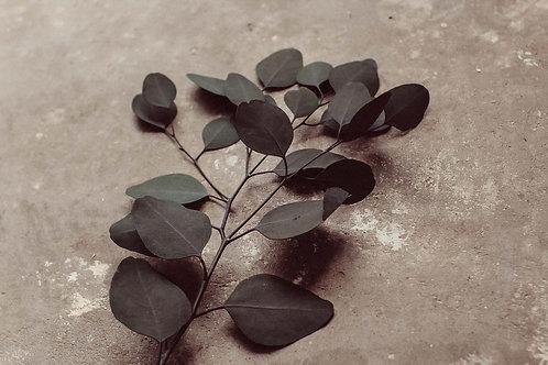 Grünblau Eukalyptus Stiel | getrocknet, versiegelt