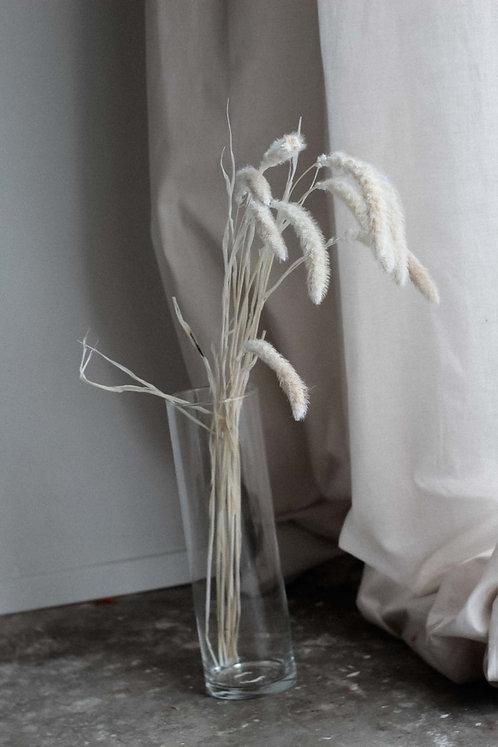 Seteria Trockenblume Foxtail | Borstenhirsen getrocknet