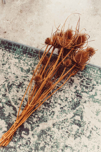 braune Disteln, Trockenblumen