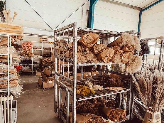 trockenblumen-grosshandel-hessen-anneschd.jpg