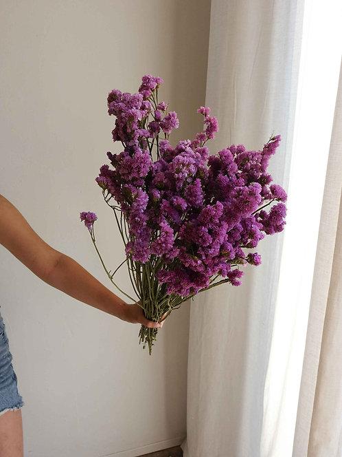 Lila Strandflieder, Trockenblume