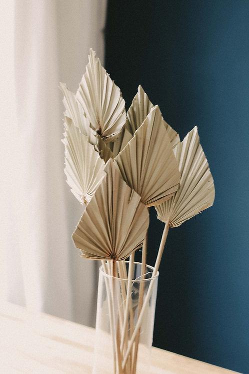 Palmblatt Speer Trockenblume