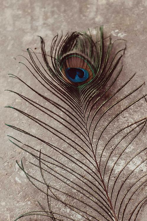 Lange Pfauenfeder | Feder vom Pfau | Trockenblumen Deko