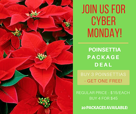 Poinsettia Package Deal - Cyber Monday