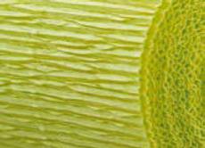 May Green Florist Crepe Paper