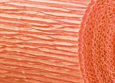 Salmon Florist Crepe Paper