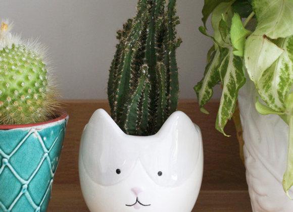 Small cat planter