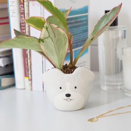 Small dog planter