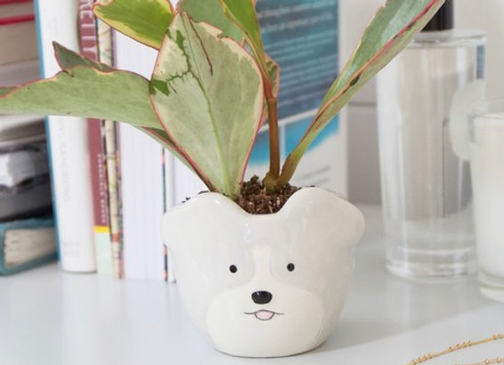 Small dog planter