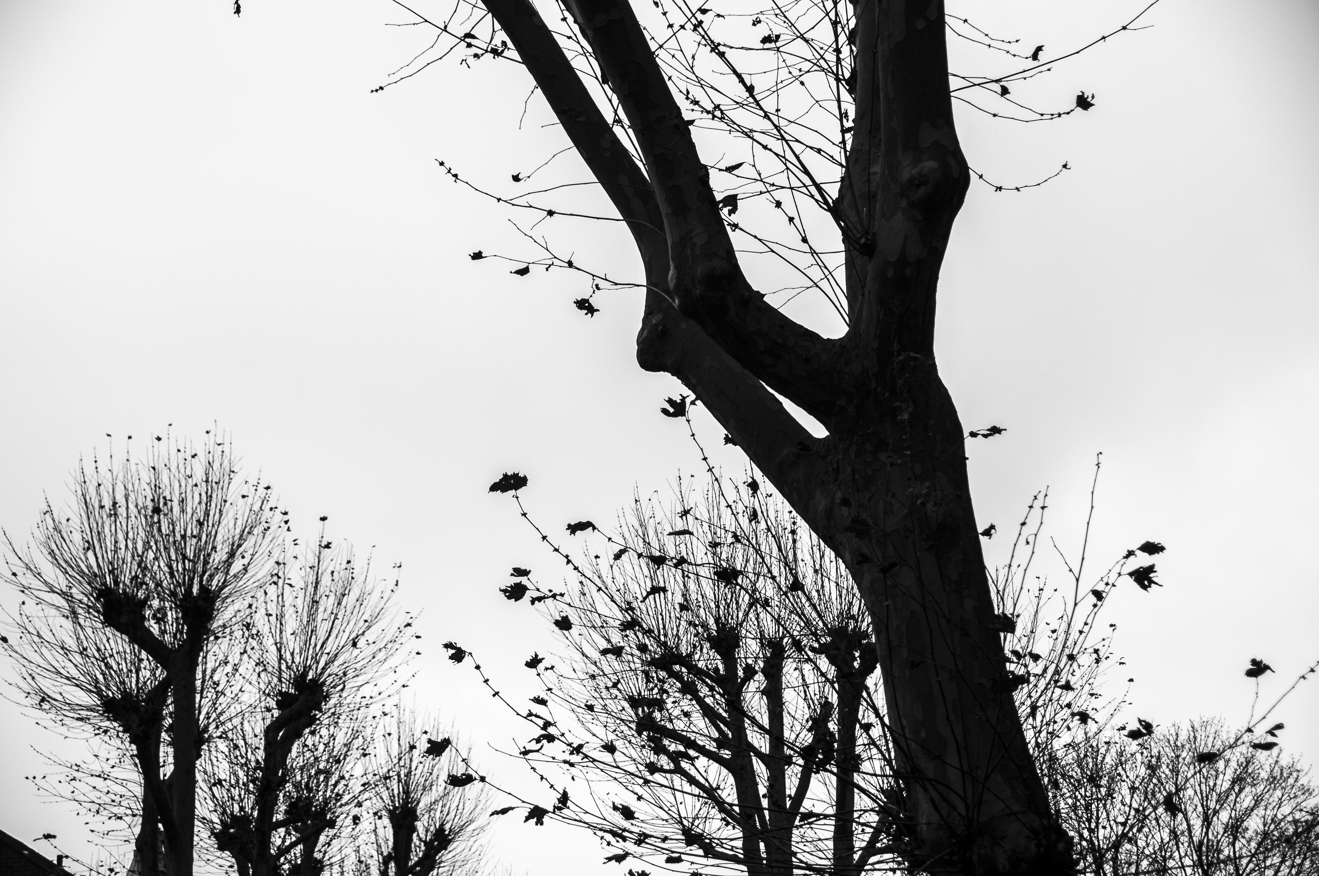 TREE FAMILY.JPG