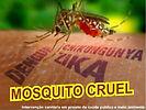 dengue 2.JPG