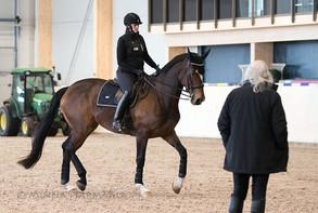 Nan Ekblom: Tämän hevosen kanssa työskentely vaatii jatkuvaa oman tietotaidon aktiivista kehittämist