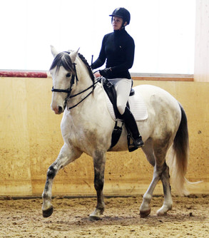 Maria Fraser-Baggström - Horse & Rider in Motion viikonloppu oli tiivis tiedontäyteinen paketti!