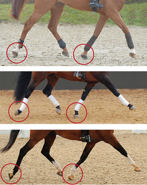 Liikkuuko hevonen tasapainossa?