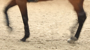 Suojat voivat kuumentamalla hevosen jalkoja, vaurioittaa hevosen jänteitä.