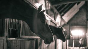 Hevosen suorituskyvyn ylläpito vaatii monen alan osaamista ja yhteistyötä