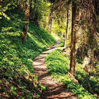 hiking trail.jpg