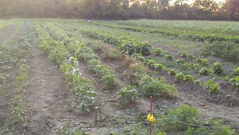 produce, garden, hungry, feeding, sustainability