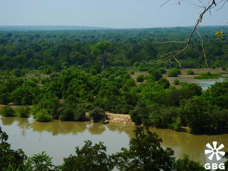 Kultaa, kaakaota ja kansallispuistoja - Ghanan uskomattoman kaunis ja runsas luonto vetää puoleensa