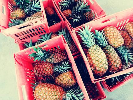 Missä ananas kasvaa?