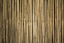 pexels-archie-binamira-2463358.jpg