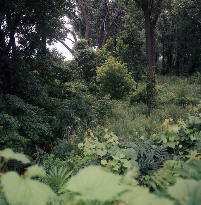 Black Swamp, From Pole to Pole  (Notes on Overgrowth 1) by Malcolm Cunningham