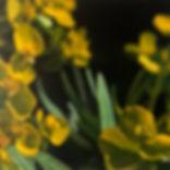 'Euphorbia', 100 x 100cm.jpg
