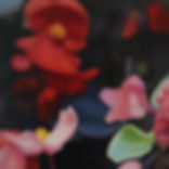 begonias 100dpi 30 x 20.jpg