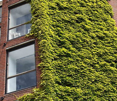 Energy Services | Building engulfed by nature
