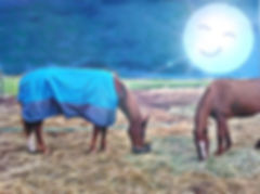 Two horses eating under the smiling full moon