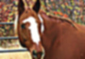 Meet Jaxy the Horse - Bella Rose & Friends