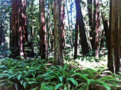 Our Friends the Ancient Redwoods
