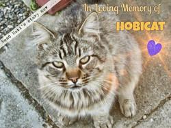 In Loving Memory of Hobicat ❤
