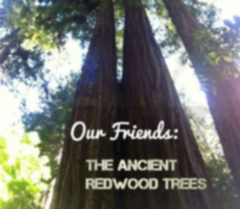 Our Friends the Ancient Redwood Trees Cover