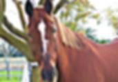 Meet Hanky the horse - Bella Rose & Friends