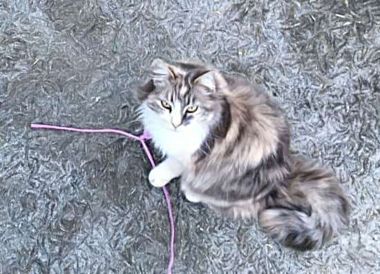 She really loves the string game!