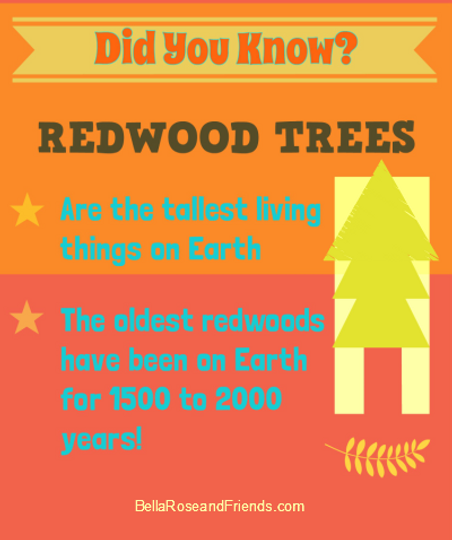 Did You Know? Facts about the Redwoods