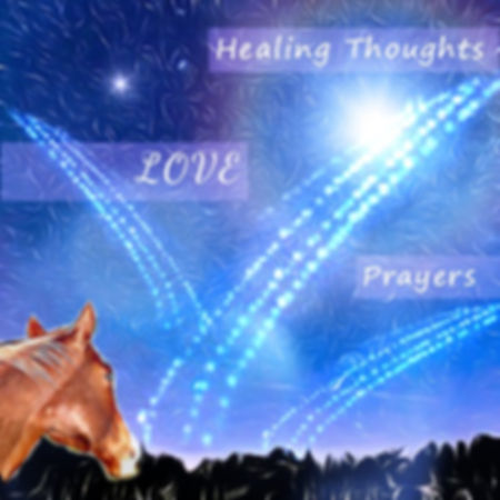 Horse showered with healing thoughts, love and prayers.