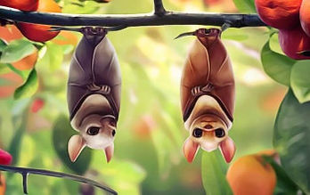 Two bats hanging upside down