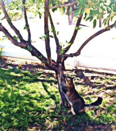 He loves to climb trees