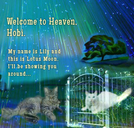 Lily & Lotus Moon welcome Hobi to Heaven